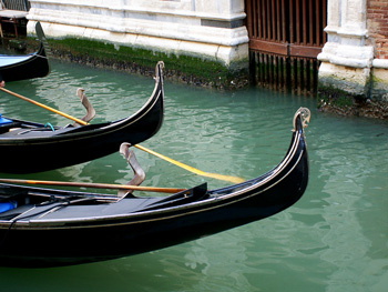Link to Allsion Doherty's Venetian Lagoon travel essay and photos page